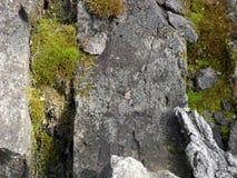 与绿色青苔的石头 免版税库存照片