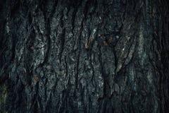 与绿色青苔的老木树皮纹理 库存图片