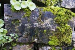 与绿色青苔的老石头 免版税图库摄影