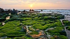 与绿色青苔,石头,在海的日出的惊人的风景 免版税库存照片