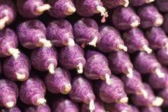 与紫色音调的五颜六色的棍子蜡烛,安排在架子和排序由颜色在蜡烛商店 免版税库存图片