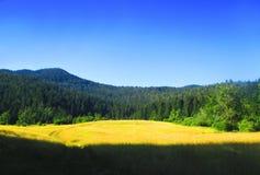 与黄色领域和绿色山的美好的风景 库存照片