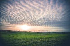 与绿色领域的农村风景 免版税库存照片