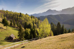 与绿色领域的春天高山风景在特兰西瓦尼亚,罗马尼亚 免版税库存照片