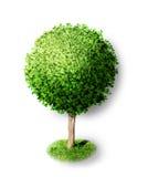 与绿色leafage的树被隔绝的 库存照片
