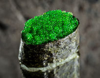 与绿色tobiko的Gunkan 免版税图库摄影