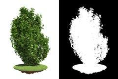 与细节光栅面具的绿色灌木。 免版税库存图片