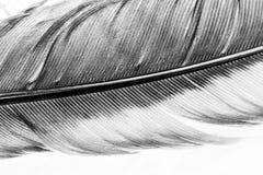 与细节的五颜六色的母鸡羽毛 库存图片