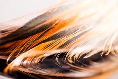 与细节的五颜六色的雄鸡羽毛 免版税库存图片