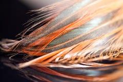 与细节的五颜六色的雄鸡羽毛 库存照片