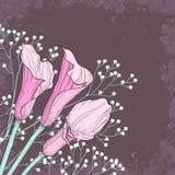 与水芋属花的典雅的花卉背景 免版税图库摄影