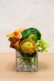 与水芋百合、兰花、普罗梯亚木和绿色的植物布置 库存照片