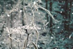 与冻花和落的雪的冬天风景 免版税库存照片