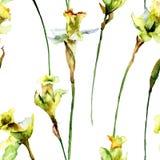 与水仙花的无缝的墙纸 免版税库存照片