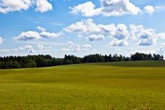 与绿草、森林和云彩的夏天风景 免版税库存照片