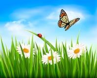 与绿草、花和a的自然背景  免版税库存照片