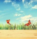 与绿草和两只蝴蝶的夏天构成 免版税图库摄影