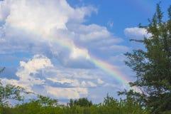 与绿草和云彩的夏天横向 免版税库存图片