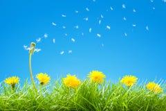 与绿草和明白蓝天- Flyi的夏天/春天场面 免版税库存照片