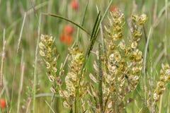 与绿草和花的领域 农业,植物 Backgrou 免版税库存图片