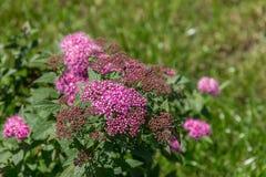 与绿草和花的领域 Agroculture,植物 图库摄影