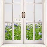 与绿草和蓝色花的开窗口在背景 免版税库存照片