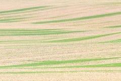 与绿草条纹的空的贫瘠棕色领域 库存图片