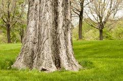 与绿草的大树干在公园 免版税库存图片