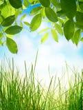 与绿草的抽象自然本底 免版税库存照片