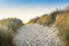 与绿草的沙丘 海滩的看法 免版税库存照片
