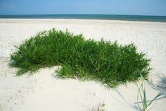与绿草的沙滩 免版税库存图片