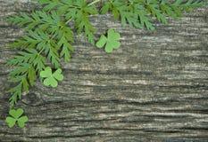 与绿草的背景 免版税库存照片