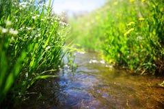 与绿草的草甸小河 免版税库存照片