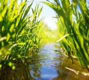 与绿草的草甸小河 库存图片