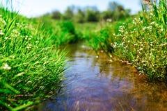 与绿草的草甸小河 免版税图库摄影