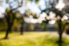 与绿草的Defocused模糊的bokeh苹果树庭院背景在一个晴天 免版税图库摄影