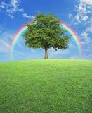 与绿草领域的大树在彩虹和蓝天, natur 免版税库存图片