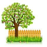 与绿草,开花的树的春天背景 向量例证