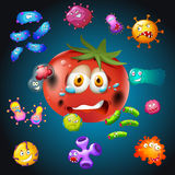 与细菌的新鲜的蕃茄 皇族释放例证