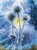 与冻蓟和草的自然冬天背景 免版税库存照片