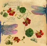 与蜻蜓例证的葡萄酒背景 库存照片