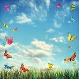 与蝴蝶和草的明亮的夏天背景 免版税库存图片