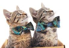 与蝴蝶的两只猫 库存照片