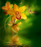 与蝴蝶的兰花 免版税库存照片