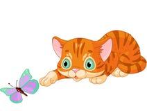 与蝴蝶的小猫作用 图库摄影