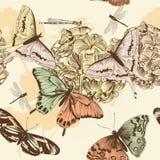 与蝴蝶的无缝的传染媒介墙纸样式在葡萄酒st 免版税库存照片