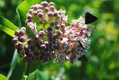 与蝴蝶的桃红色花 免版税库存照片
