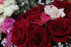 与蝴蝶的玫瑰 库存图片