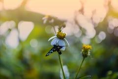 与蝴蝶的白花 免版税库存照片