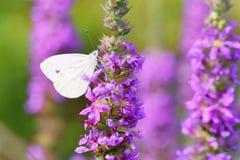 与蝴蝶的美丽的开花花 与太阳的自然场面在晴天 下雨 摘要被弄脏的五颜六色的backgroun 免版税图库摄影